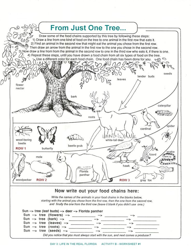 Food Web Worksheet Pdf Archbold Biological Station