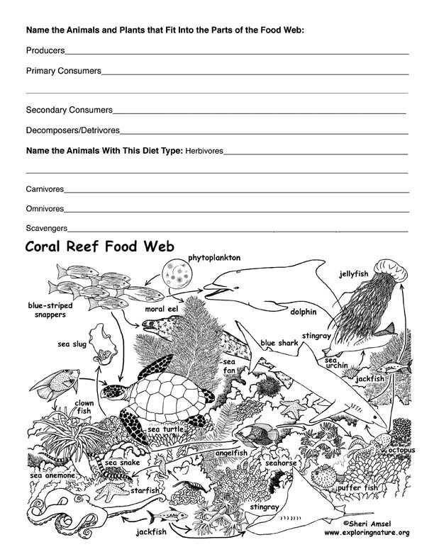 Food Web Worksheet Pdf Coral Reef Food Web