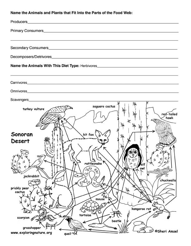 Food Web Worksheet Pdf Desert Food Web Activity