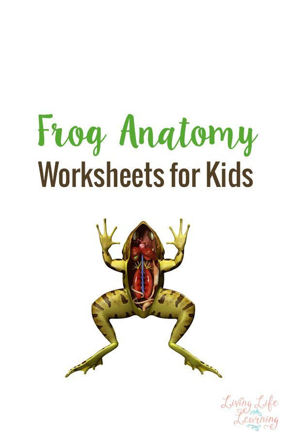 Frog Dissection Worksheet Answer Key Frog Anatomy Worksheets for Kids