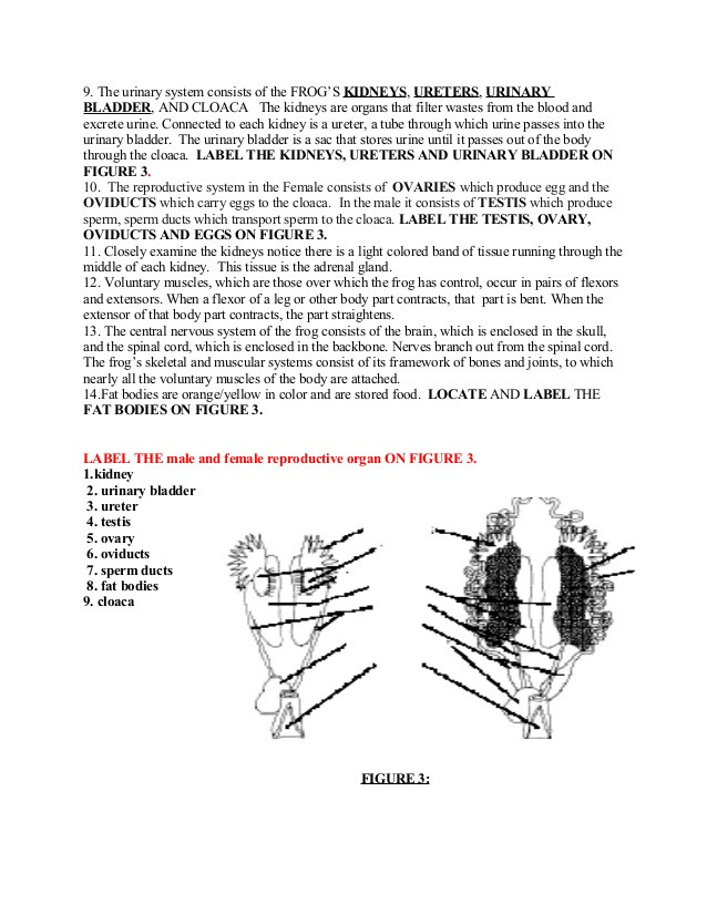Frog Dissection Worksheet Answer Key Frog Dissection Lab Answer Key