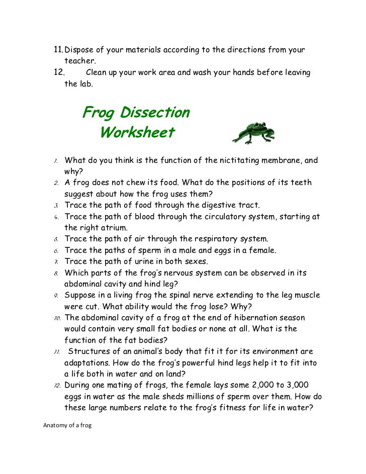 Frog Dissection Worksheet Answer Key Frog Dissection Lab Report by Gina Biasi On Prezi