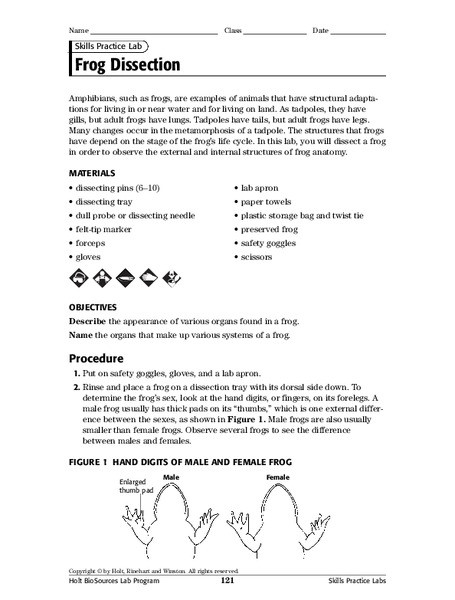 Frog Dissection Worksheet Answer Key Frog Dissection Worksheet for 7th 8th Grade