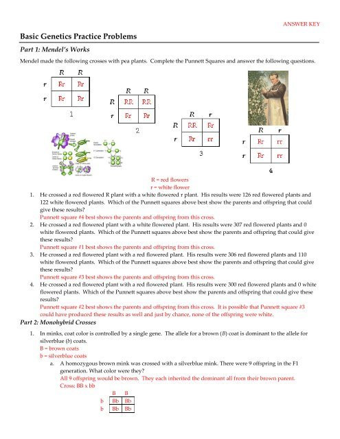 Genetics Practice Problem Worksheet Basic Genetics Practice Problems