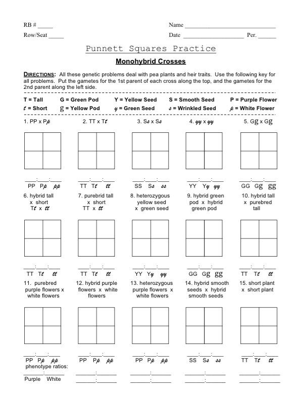 Genetics Practice Problem Worksheet Punnett Square Monohybrid Cross Worksheets