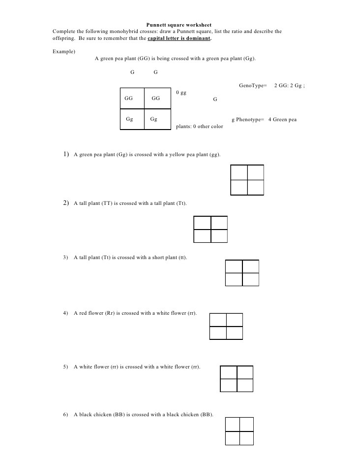 Genetics Practice Problem Worksheet Punnett Square Worksheet