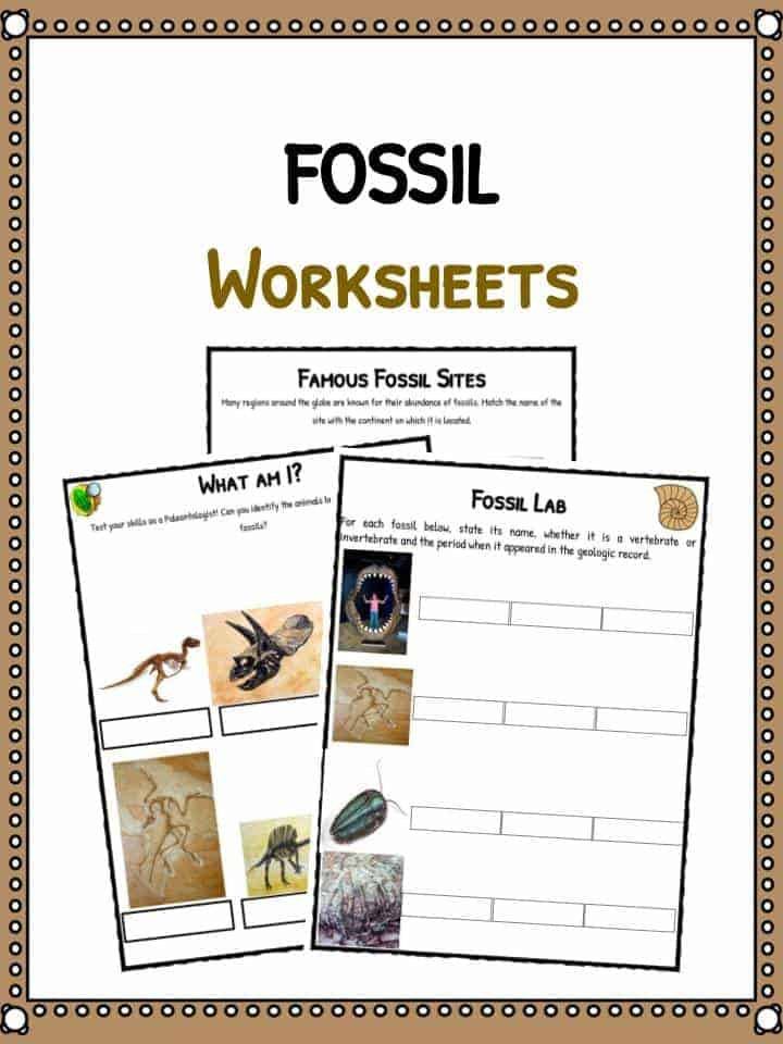 Geological Time Scale Worksheet Fossil Facts & Worksheets for Kids