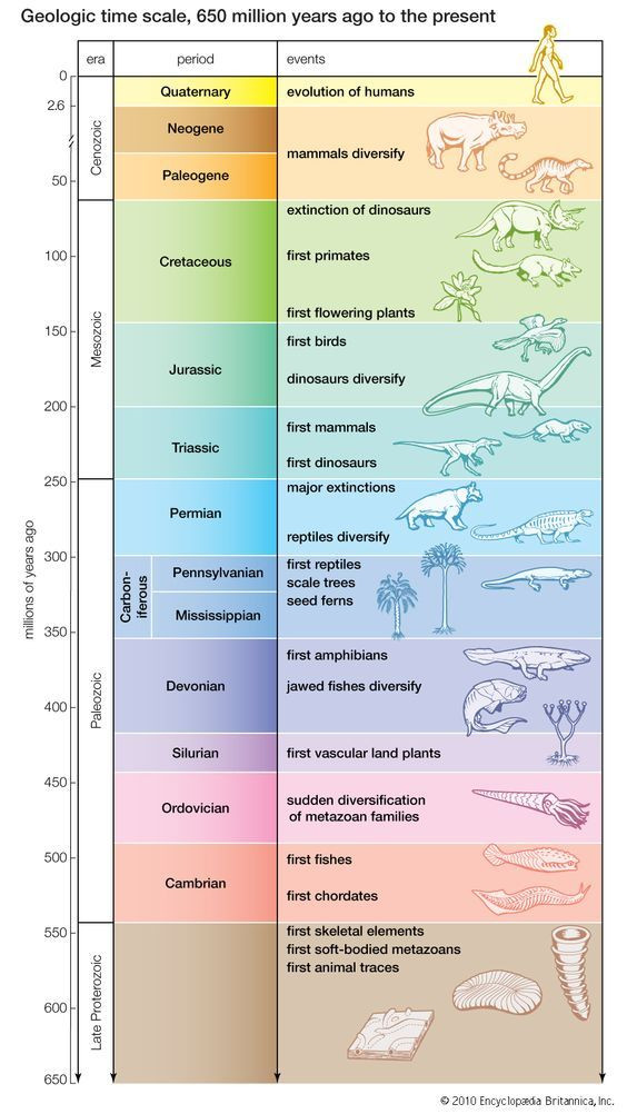 Geological Time Scale Worksheet Geologic Time Scale On Planet Earth 650 Million Years Ago