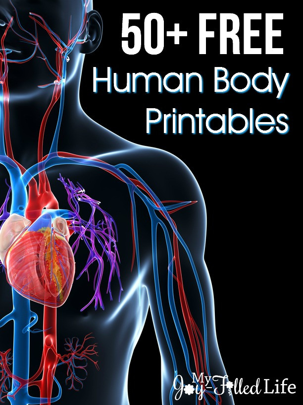 Human Body Worksheets Middle School 50 Free Human Body Printables My Joy Filled Life