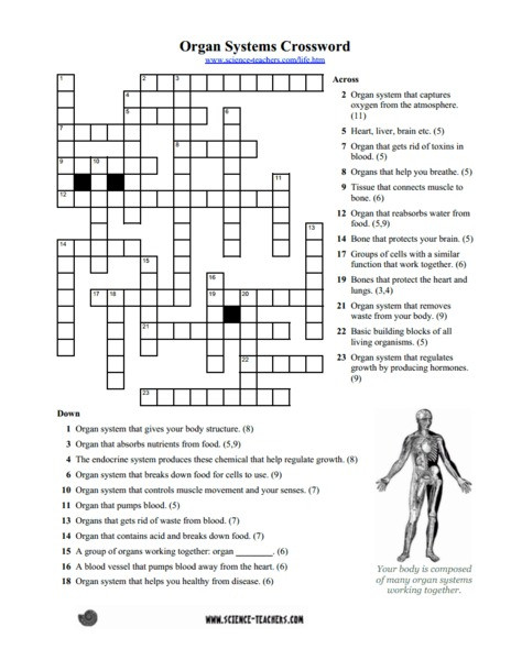 Human Body Worksheets Middle School Body Systems Worksheets Answers Worksheet Free 2nd Grade