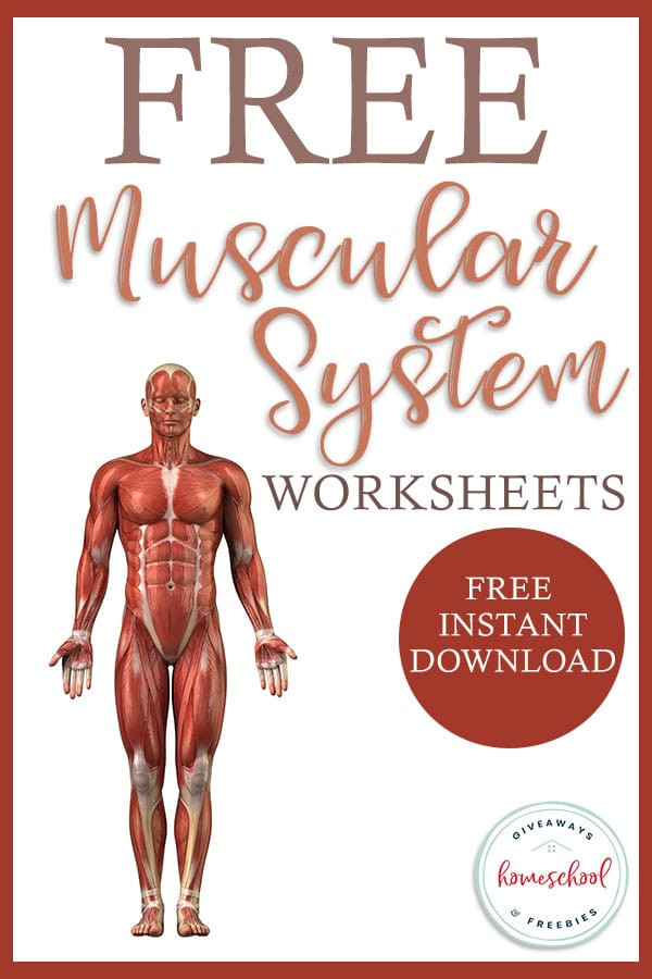 Human Body Worksheets Middle School Free Worksheets for the Muscular System Homeschool Giveaways