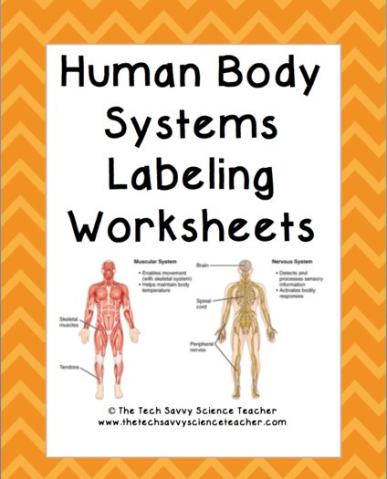 Human Body Worksheets Middle School Human Body System Labeling Worksheets