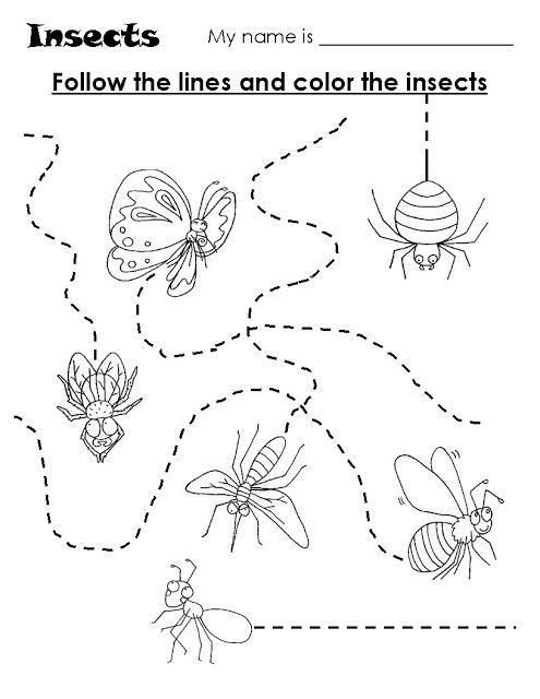 Insect Worksheets for Preschoolers Animal Trace Worksheets for Kids