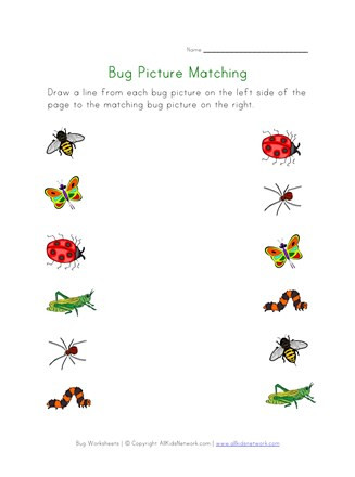 Insect Worksheets for Preschoolers Bugs Worksheet for Kids Picture Matching