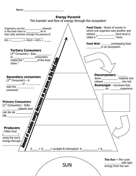 Levels Of Ecological organization Worksheet Ecological Pyramid Worksheet Energy Pyramid Worksheets