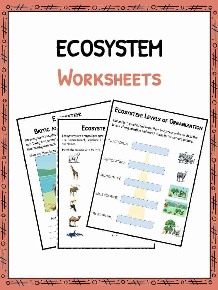 Levels Of Ecological organization Worksheet Ecosystem Worksheets
