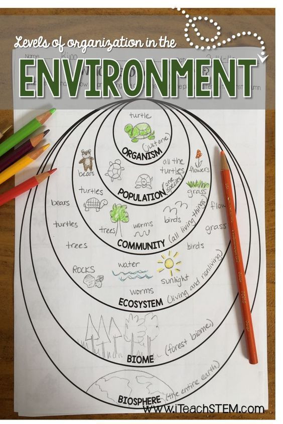 Levels Of Ecological organization Worksheet Stem Ecological organization formative assessments