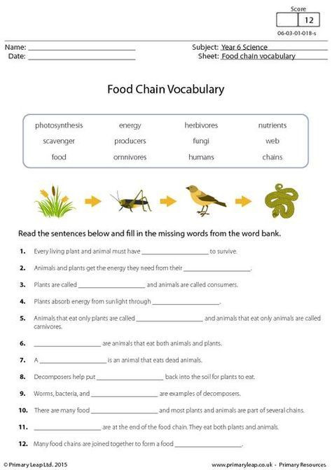 Middle School Science Worksheets Pdf Primaryleap Food Chain Vocabulary Worksheet
