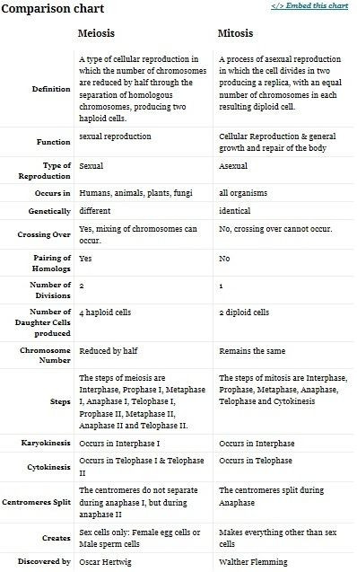 Mitosis Vs Meiosis Worksheet Answers Chart Meiosis Vs Mitosis