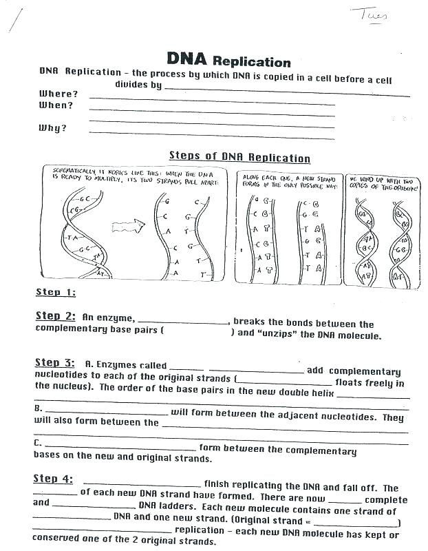 Nucleic Acid Worksheet Answers Biology Corner Dna Coloring Worksheet Answers