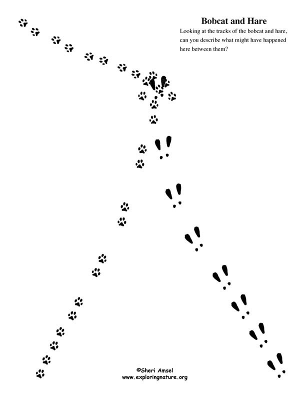 Observation and Inference Worksheet Animal Tracking Observation Vs Inference Activity