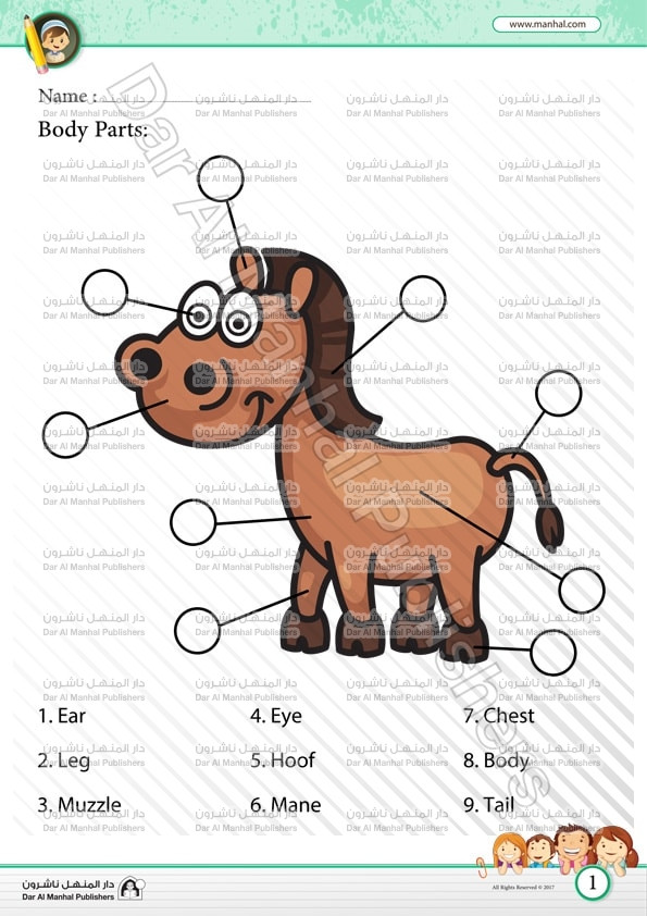 Parts Of the Horse Worksheet Body Parts Horse