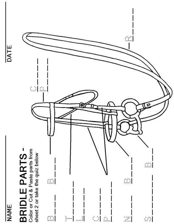 Parts Of the Horse Worksheet Bridle Parts Fill the Blanks Horsemastership Glenlyon