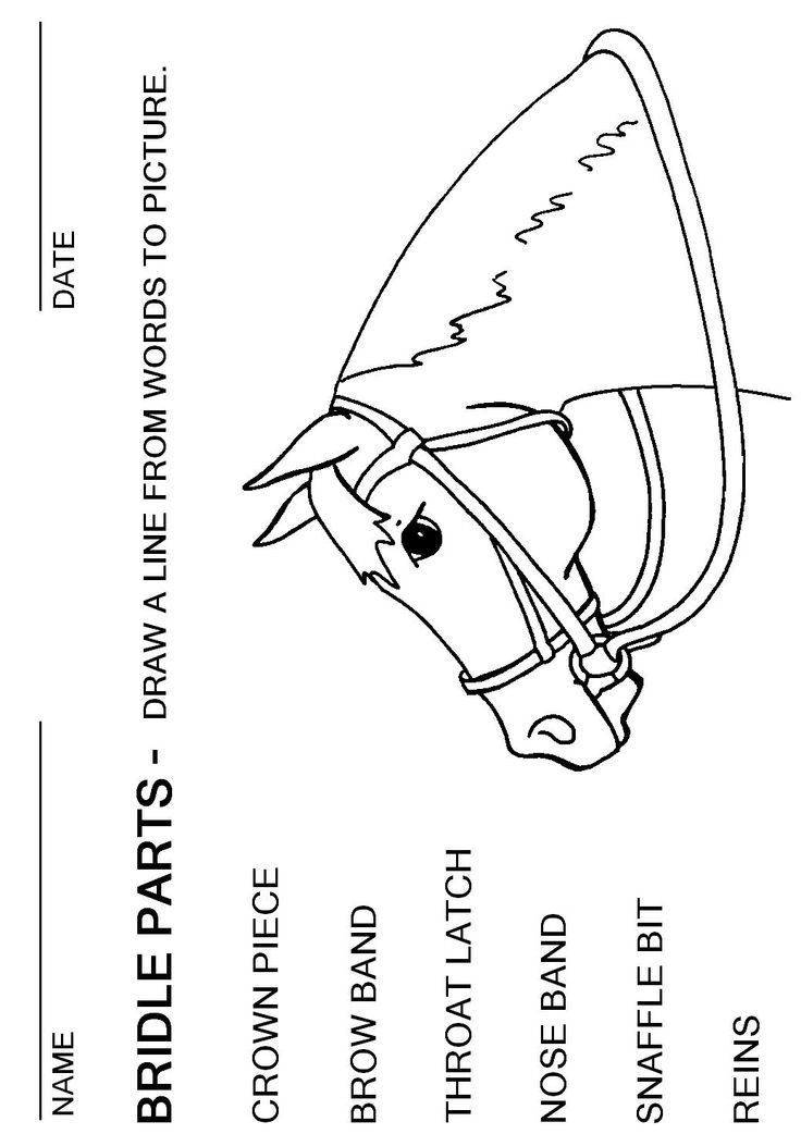 Parts Of the Horse Worksheet English Bridle Parts Worksheet