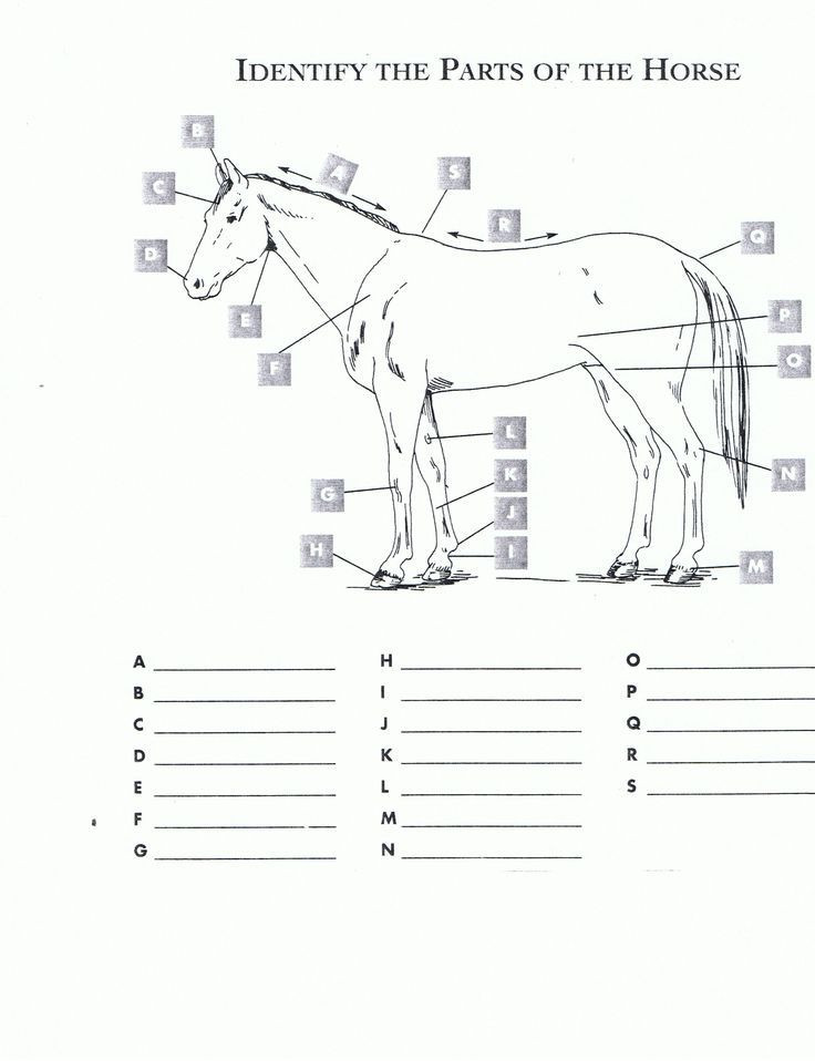 Parts Of the Horse Worksheet Free Printable Horse Worksheets Red