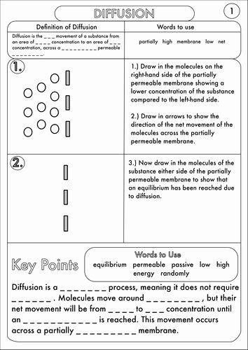 Passive and Active Transport Worksheet Pin On Customize Design Worksheet Line