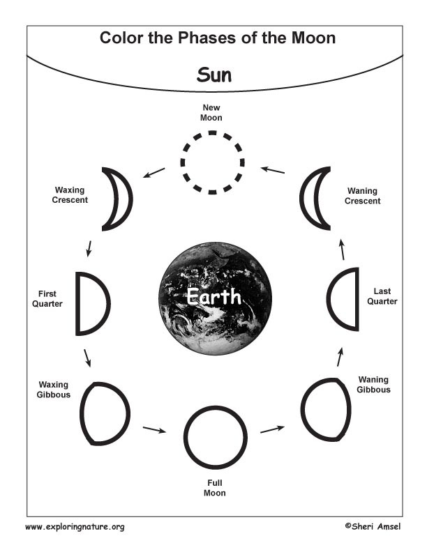 Phases Of the Moon Worksheet Moon Phases Coloring