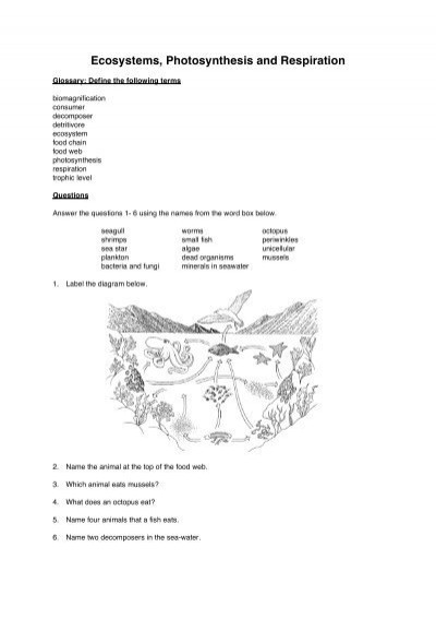 Producer Consumer Decomposer Worksheet Ecosystems Synthesis and Respiration Worksheet Booklet