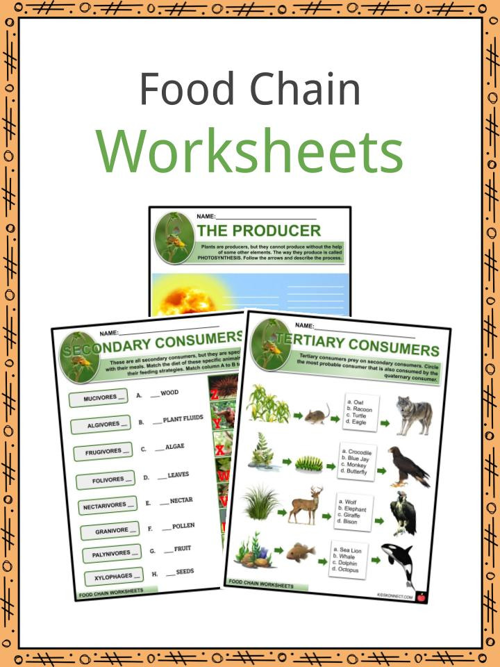 Producer Consumer Decomposer Worksheet Food Chain Facts Worksheets & Tale Survival for Kids