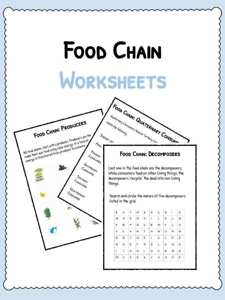 Producer Consumer Decomposer Worksheet Food Chain Worksheet Collection Pizza &co
