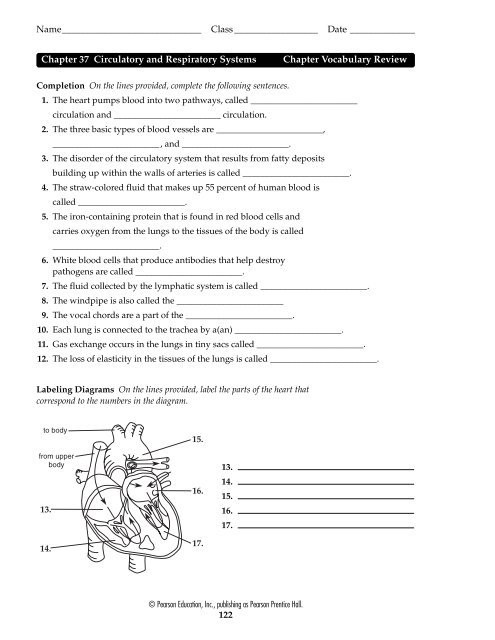 Respiratory System Worksheet Answer Key Chapter 37 Circulatory and Respiratory Systems Chapter