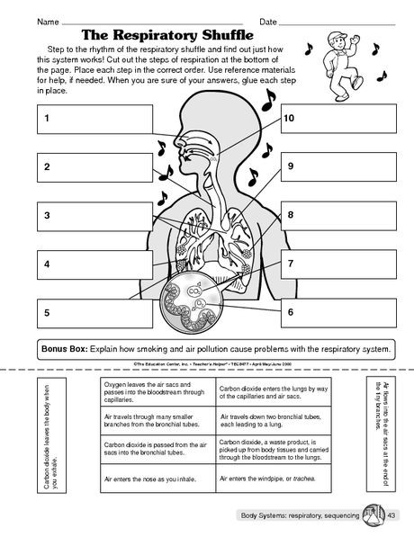 Respiratory System Worksheet Answer Key the Respiratory Shuffle the Mailbox