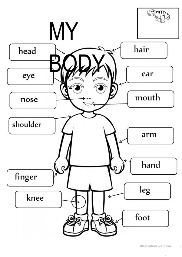 Spanish Body Parts Worksheet Body Parts Fill In the Blanks English Esl Worksheets for
