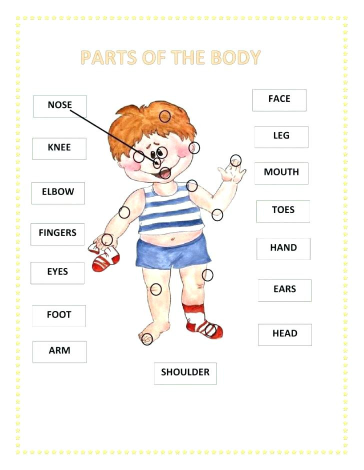 Spanish Body Parts Worksheet Body Parts In Spanish Worksheet Print the Parts the Body