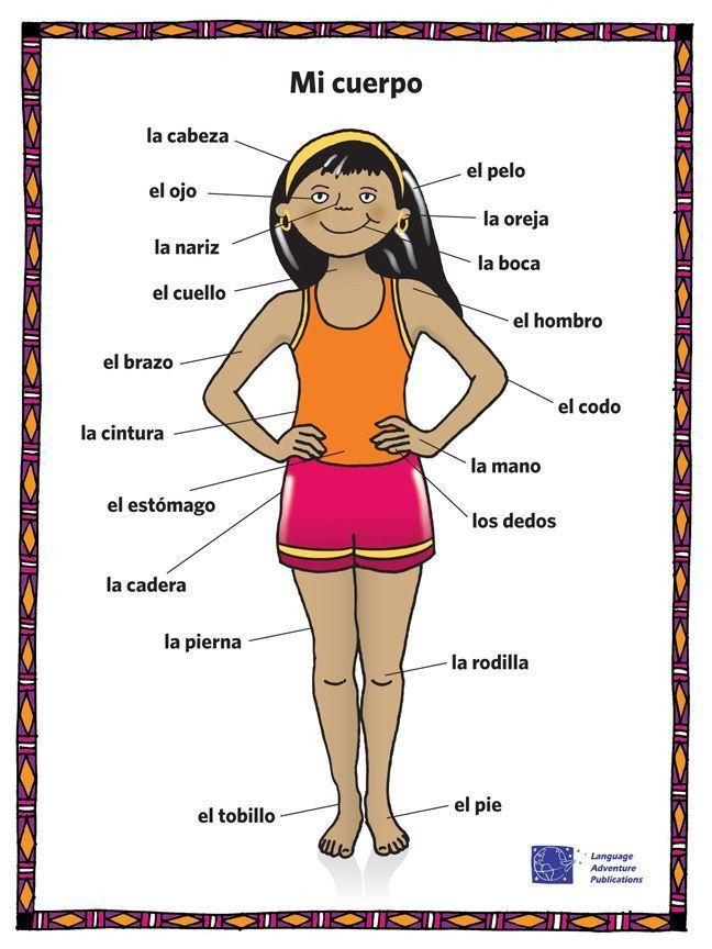 Spanish Body Parts Worksheet Pin On Clase De Español