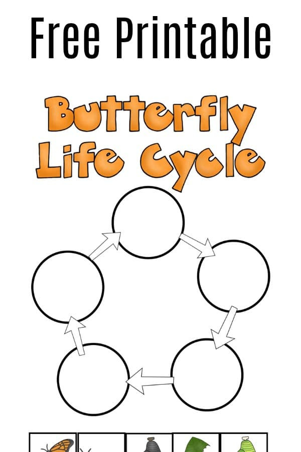 Stages Of Change Worksheet butterfly Life Cycle Worksheet