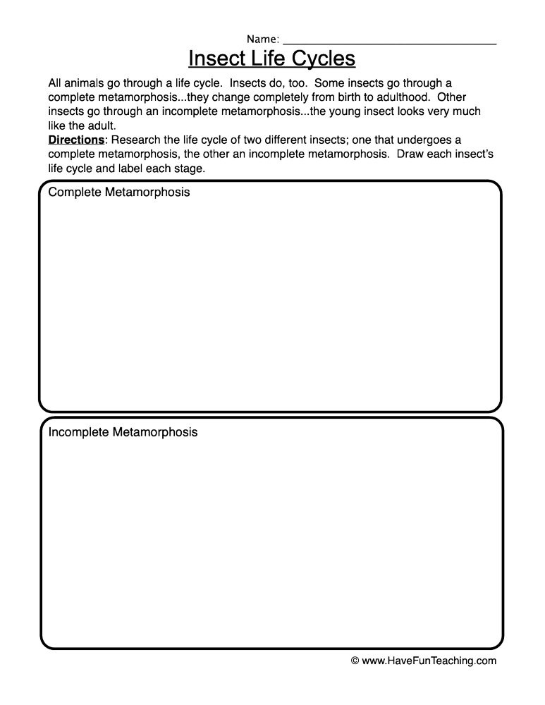 Stages Of Change Worksheet Insect Life Cycles Worksheet