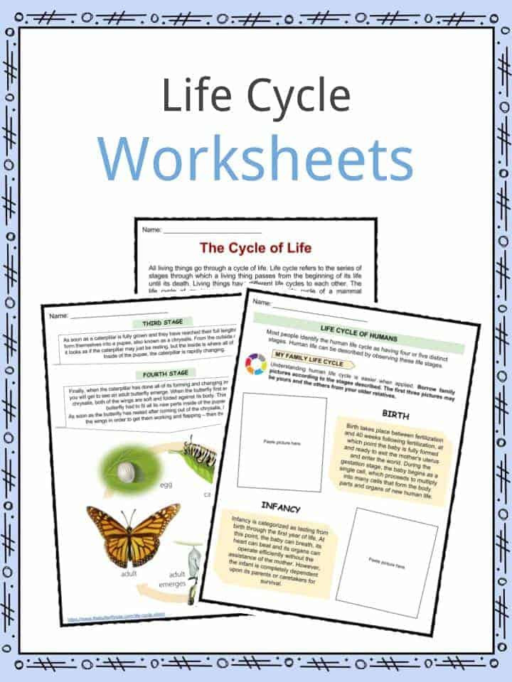 Stages Of Change Worksheet Life Cycle Facts Worksheets Examples & Stages Life for Kids