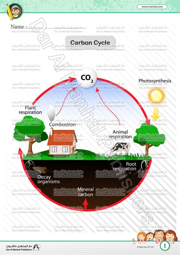 The Carbon Cycle Worksheet Answers Carbon Cycle