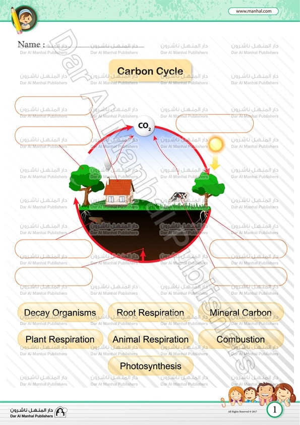 The Carbon Cycle Worksheet Carbon Cycle