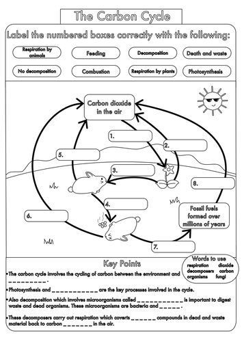 The Carbon Cycle Worksheet Pin by M Hodge On Earth Science with Images