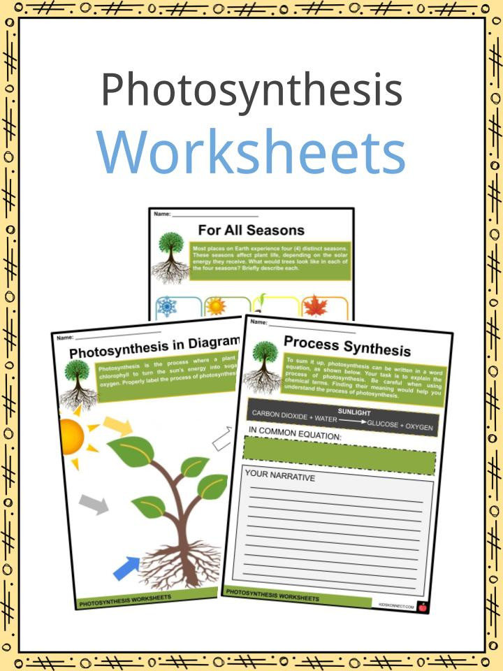 The Carbon Cycle Worksheet Synthesis Facts Information & Worksheets for Kids