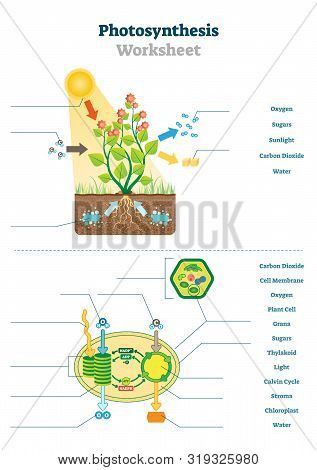 The Carbon Cycle Worksheet Synthesis Vector & Free Trial