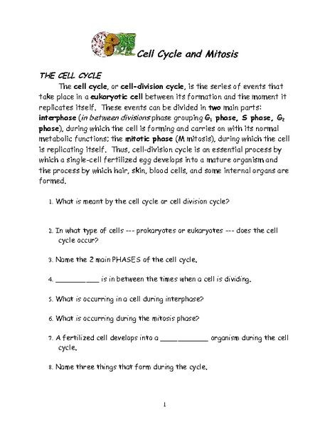 The Cell Cycle Worksheet Answers Cell Cycle and Mitosis Worksheet for 6th 12th Grade