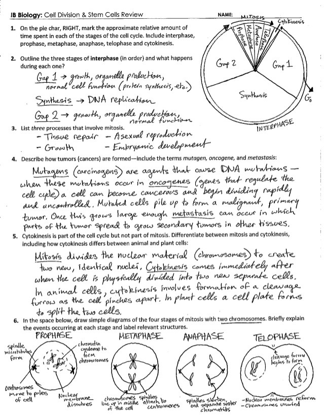 The Cell Cycle Worksheet Answers Ib Cell Division Review Key 1 6