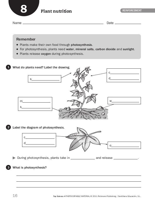 The Nature Of Science Worksheet 16 top Science 4 Photocopiable Material © 2011 Richmond
